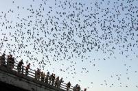 Austin Bats